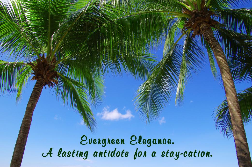 Evergreen Elegance.