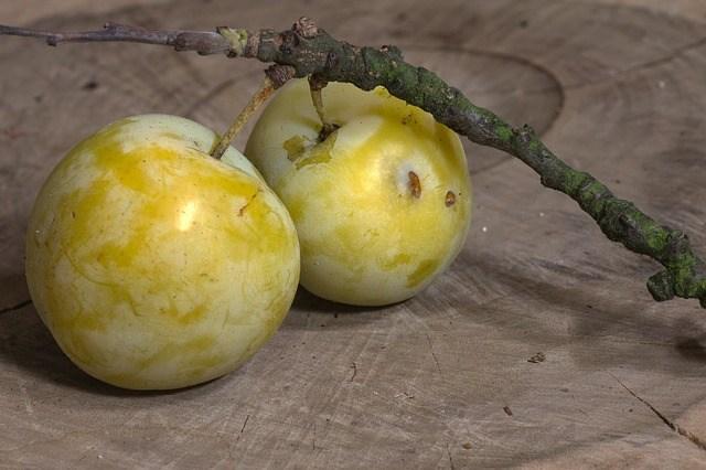 Gold Plum fruit